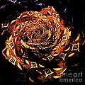 4 4 Echo Rose by Elizabeth McTaggart