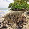Anne's Beach-2 by Rudy Umans