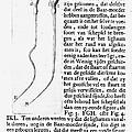 Anton Van Leeuwenhoek by Granger