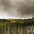 Aspen Trees In Vail by Madeline Ellis