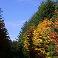 Autumn 9 by J D Owen