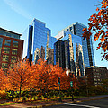Autumn In Boston by Toby McGuire