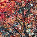 Autumn Leaves by Rafael Salazar