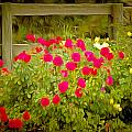 Fence Line Flowers by Barbara Snyder