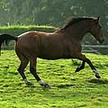 Bay Horse by Angel Ciesniarska