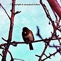 Bird In Tree by Karl Rose