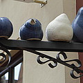4 Birds by Steve K