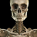 Bones Of The Head And Upper Thorax by Science Picture Co