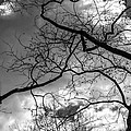 Branches And Clouds by Robert Ullmann