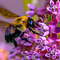 Busy Bee by Brian Stevens