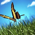 Monarch Butterfly by Tony Cordoza