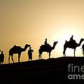Camel Caravan, India by John Shaw