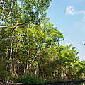 Caroni Swamp by Gareth Leigh