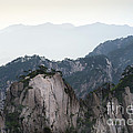 Chinese White Pine On Mt. Huangshan by John Shaw