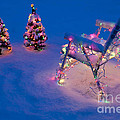 Christmas Lights On Trees And Lawn Chair by Jim Corwin