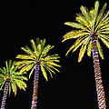 4 Christmas Palms by Michael Thomas