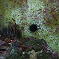 Coral by Robert Floyd