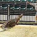 Crocodile by Carol Ailles