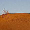 Death Valley Dunes by Diana Hughes
