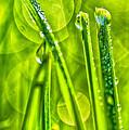 Dew On Grass by Thomas R Fletcher