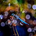 Dragonfly by Michael Brooks