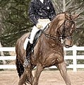Dressage Horse Portrait by Olde Time  Mercantile