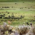 Environmental Tierra Del Fuego -- by Kevin Moloney