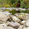 Fall Along Cherry River by Thomas R Fletcher