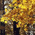 Fall Yellow by Elaine Mikkelstrup