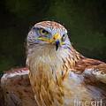 Ferruginous Hawk by Les Palenik