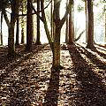 Forest Sunlight by Les Cunliffe