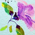 Hibiscus  by Patricia Lazaro