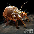 House Dust Mite by Science Picture Co