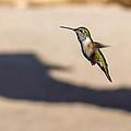 Hummingbird by Ernie Echols