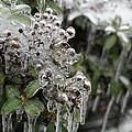 Ice  by Heidi Poulin