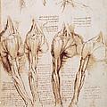 Leonardo: Anatomy, C1510 by Granger