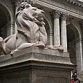 Lion New York Public Library by Amy Cicconi