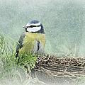 Little Bird by Heike Hultsch
