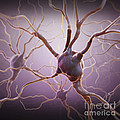 Neuron by Science Picture Co