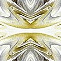 Nonstop Apple Blossom Abstract by J McCombie