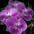 Orchid Dream by Paul Slebodnick
