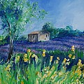 Provence Lavender Field by Eric  Schiabor
