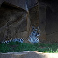 Riverbanks Zoo Columbia Sc by William Copeland