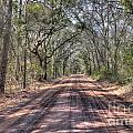 Road To Angel Oak by Dale Powell