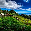 Sao Miguel Landscapes by Joseph Amaral