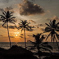 Sunset And Palm Tree by Guillaume Gauthereau