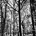 The Forest by David Pyatt