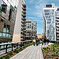 The High Line Urban Park New York Citiy by Amy Cicconi