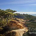 Torrey Pines State Park - California by Yefim Bam