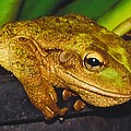 Treefrog by Robert Floyd